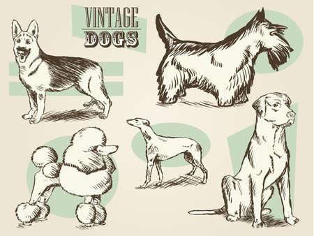 Classic Retro Ornate Dog Collection Vector