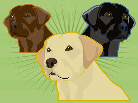 golden retriever puppy: Labrador Dogs Illustration