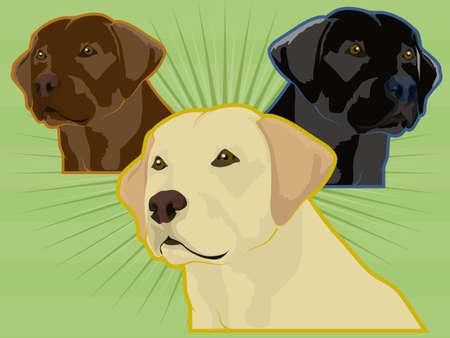 Labrador Dogs Illustration