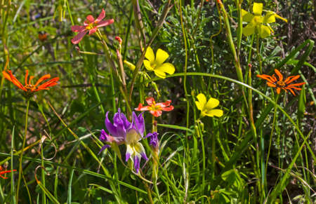 Multicolored spring wildflowers