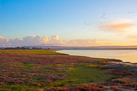 Landscape of broad Berg River with multicoloured salt mash, birds and distant clouds in the evening, Western Cape, South Africa 版權商用圖片