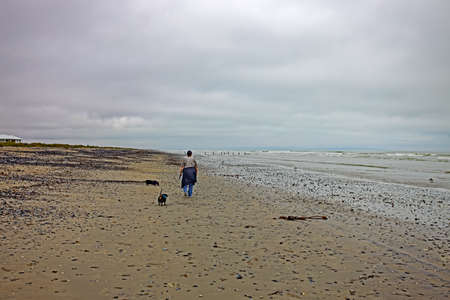 Lady with two dogs walking on beach Stock Photo