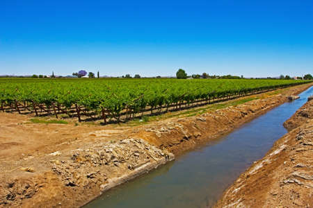 Irrigation canal and green vineyard on island in Orange River flowing past grape vines in Northern Cape, South Africa