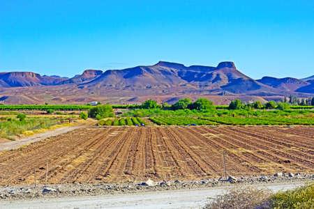 Farmland in arid region along Orange River near Vioolsdrif, Northern Cape, South Africa
