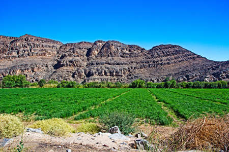 Green irrigated field near to Orange River in Northern Cape with rugged mountains in background