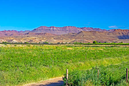 Irrigated farmland on edge of Orange River with rugged mountains in background in Northern Cape, South Africa