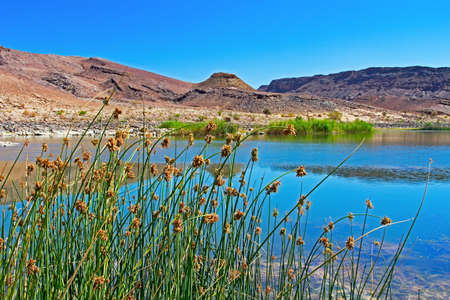 Reeds overlooking broad Orange river with arid Namibian mountains in background