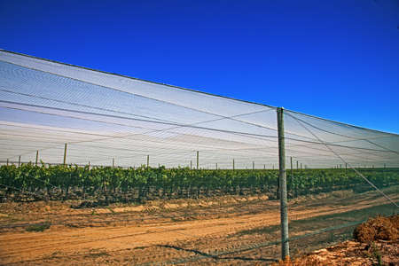 Shade netting protecting vineyard from insects