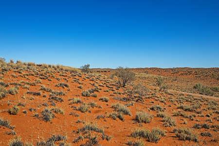 Sand dunes covered in scrub in Kalahari Desert, Northern Cape, South Africa