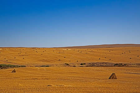 Haystacks after harvesting wheat near Piketberg in Western Cape, South Africa