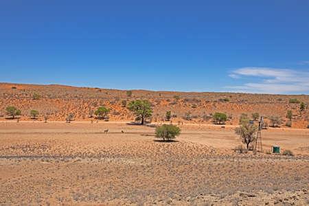 Valley with windmill and kudu in Kalahari desert Reklamní fotografie