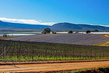 Landscape of young vineyards and mountains near Oliphants River, Western Cape, South Africa Banco de Imagens
