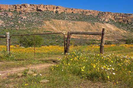 Bright yellow wildflowers inside gated field