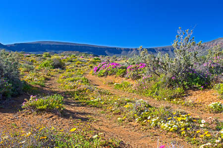 Dirt track with multicolored wildflowers in Karoo