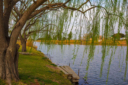 Peaceful river with willow trees in Northern Cape Banco de Imagens
