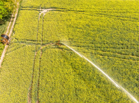 Aerial view from the sprinkler system to supply the plants with water from a blooming field with oilseed rape (Brassica napus), germany