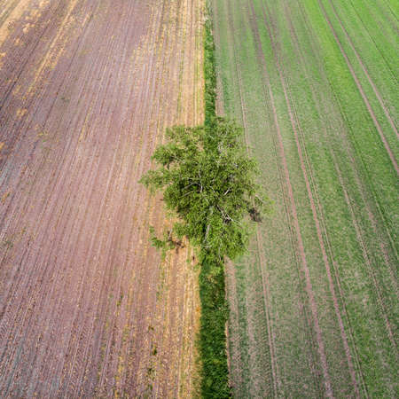 Aerial view of a single tree taken at an angle from a great height at the border of two different farmland areas in Germany near Gifhorn, made with drone
