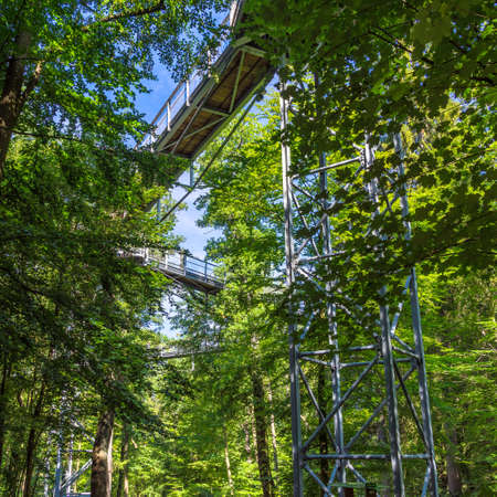 Treetop path through the mixed forest at the northern edge of the Harz, view from below to the supports and wooden planks. Banco de Imagens