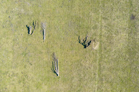 Abstract aerial view of dead trees on a meadow, drone flight