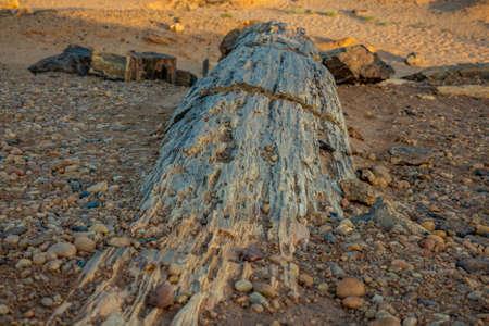 Petrified wood trunks in the stone desert in Sudan, Africa