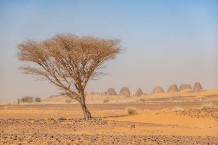 Acacia tree in the desert of Sudan with a group of pyramids in the background, Africa