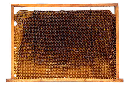 Real honeycomb removed from the hive isolated on white