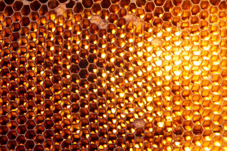 Honeycomb background  photo