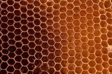 Honeycomb background Stock Photo - 16438953