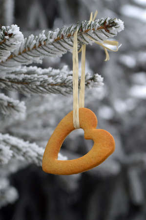Heartshape cookie hanging on the winter spruce. Stock Photo - 17246616