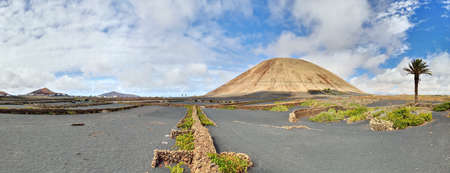Typical volcano-agricultural landscape of Lanzarote, Canary Islands. Black volcanic soil, malvasia vines, Date Palm Tree (Phoenix canariensis), figs and prickly pears. Location-Mancha Blanca village.