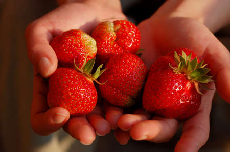 Few fresh strawberries on woman hands  photo