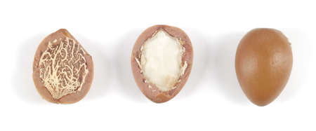 Close up of argan nuts in a row on a white background  Horizontal studio shot