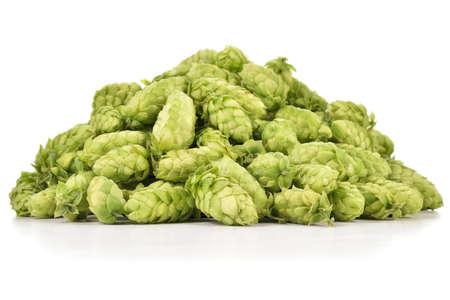 Montão de lúpulos verdes frescos (lupulus do Humulus) isolados no fundo branco. Pilha de lúpulo, ingrediente para a indústria cervejeira.