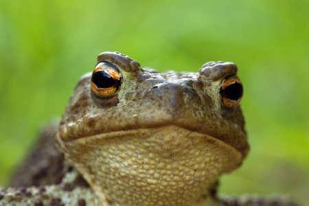 part frog: Frog eye