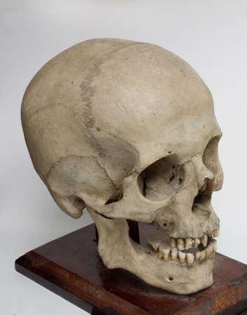 Human braincase on a wooden desk