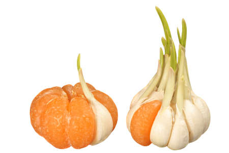 Mandarin with one garlic clove and garlic with one mandarin segment: concept of similarity and dissimilarity Stock Photo