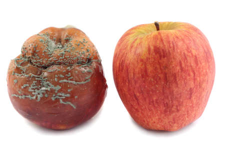 Fresh red apple and rotten apple, isolated on white background