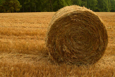 A round bale of hay set against a field and trees Stock Photo