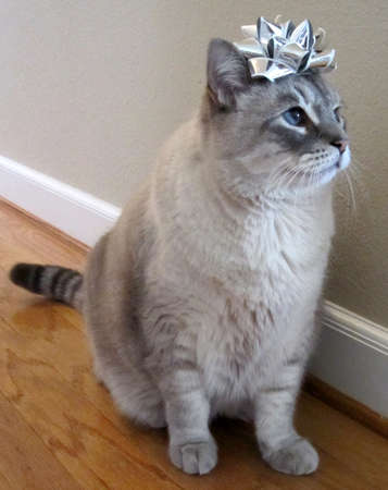 Cat with Christmas Bow on Head photo