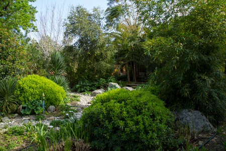 perennial: Beautiful designed garden with perennial plants