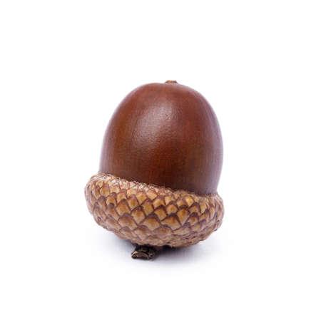 Ripe acorns isolated on white background