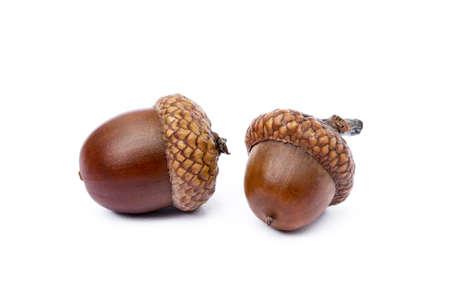 Ripe acorns isolated on white background Reklamní fotografie
