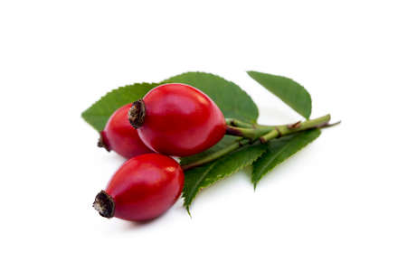 Ripe rose hip isolated on white background Imagens