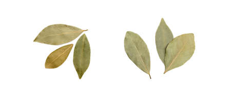 Dried bay leaf isolated on white background Banco de Imagens