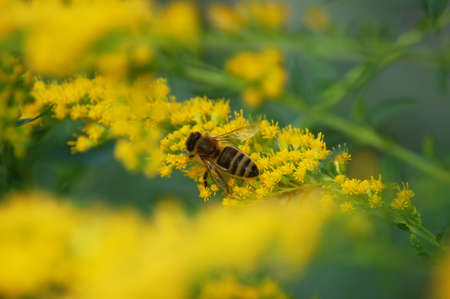 Close-up photo Insect bee on Yellow Flowers photo