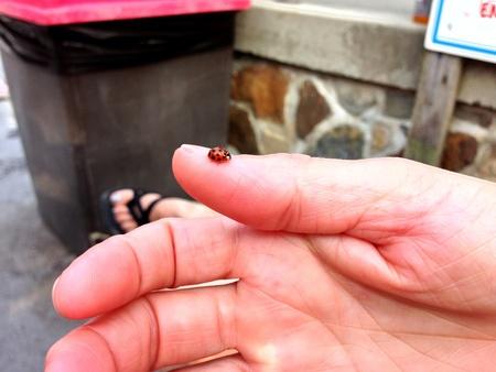 A ladybug laying on thumb. Zdjęcie Seryjne