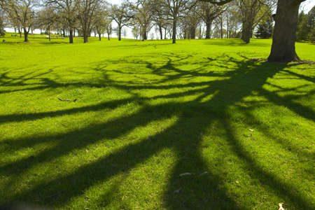 Wooded areas Stock Photo