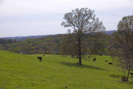 Ozark countryside Stock Photo - 1208031