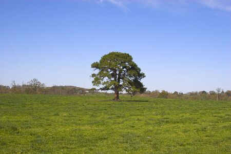 Ozark countryside Stock Photo - 1208029