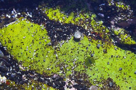 Underwater tidal communities of atlantic seashore in New England during their famous Autumn Stock Photo - 1208074